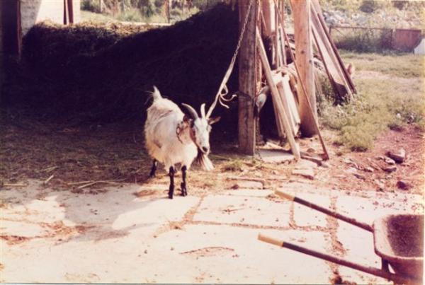 Alla Tîż - Com'era con il fieno e la capra